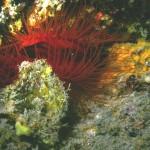 5-25 Gulf Black Hole Dive 043