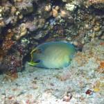5-25 Gulf Black Hole Dive 044