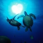 dive turtles