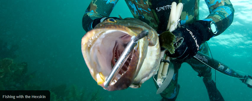 Fishing Charters Naples Florida And Scuba Diving
