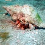 5-25 Gulf Black Hole Dive 058