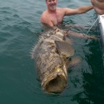 100 lb goliath grouper caught off Naples FL