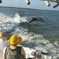 dolphin dusky