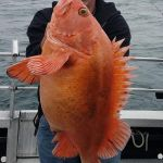 yelloweye rockfish, yellow eye snapper, fishing in Homer AK, Seward AK
